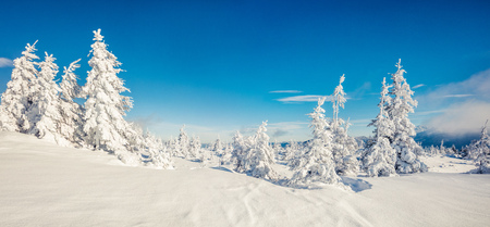 Sunny morning panorama in the mountain forest. Bright winter landscape in the snowy wood, Happy New Year celebration concept. Artistic style post processed photo.