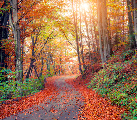 Colorful autumn csene in the mountain forest. Beautiful morning view in Carpathian mountains, Ukraine, Europe. Travel concept background.