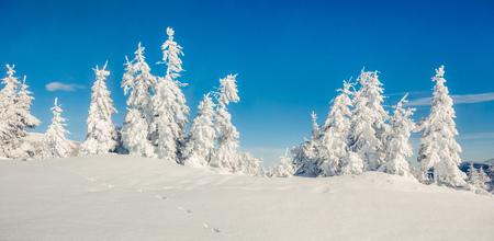 山の森林の晴れた朝のパノラマ。雪に覆われた木、新年あけましておめでとうございますお祝いコンセプトの明るい冬の風景。芸術的なスタイルの