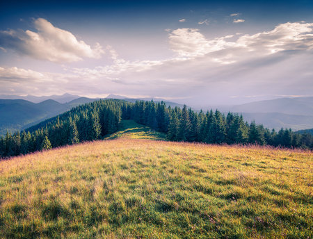 Bright summer morning on the mountain valley. Sunny outdoor scene in the Carpathian mountains, Ukraine, Europe. Stock Photo