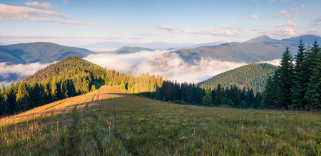 Bright summer morning in the Carpathian mountains. Picturesque outdoor scene on the mountain valley in June, Ukraine, Tatariv village location, Europe. Beauty of nature concept background.
