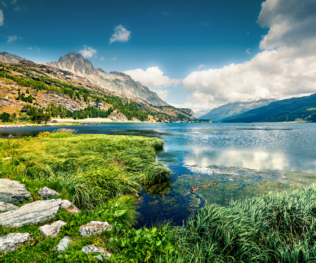 Marvelous summer view of Sils lake. Picturesque outdoor scene in Swiss Alps, Sondrio province Lombardy region, Italy, Europe. Green filter toned.