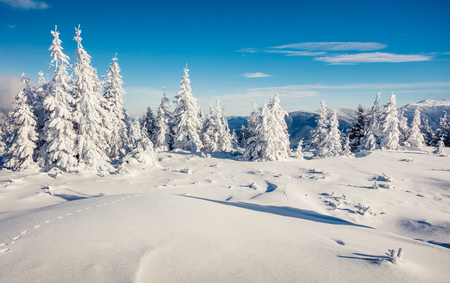 Sunny morning scene in the mountain forest. Bright winter landscape in the snowy wood, Happy New Year celebration concept. Artistic style post processed photo. Stock Photo