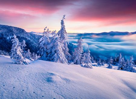 대로 산에서 화려한 겨울 일출 눈이 덮여 전나무 나무. 다채로운 야외 현장, 행복 한 새 해 축 하 개념. 예술적 스타일 게시물 처리 된 사진입니다. 스톡 콘텐츠