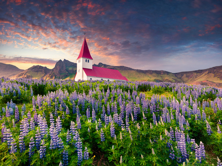 Vik i Myrdal Church surrounded by blooming lupine flowers in Vik village. Dramatic summer sunrise in the Iceland, Europe. Artistic style post processed photo. Stock Photo