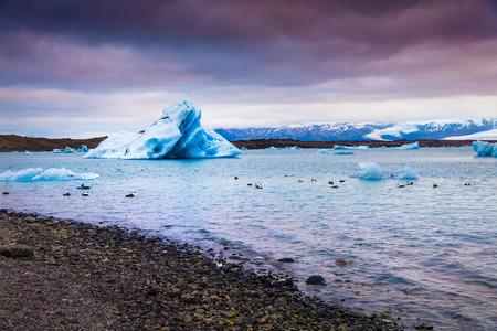 Arctic ducks between blue icebergs in Jokulsarlon glacial lagoon. Colorful summer sunset in Vatnajokull National Park, southeast Iceland, Europe. Artistic style post processed photo.