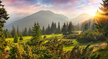 Fabelhafter Frühlingssonnenaufgang in den Karpatenbergen. Bunte Morgenszene in einer Bergwiese. Künstlerischer Stil nachbearbeitetes Foto. Schönheit des Naturkonzepthintergrundes.