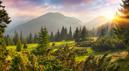Fabulous spring sunrise in the Carpathian mountains. Colorful morning scene in a mountain meadow. Artistic style post processed photo. Beauty of nature concept background.