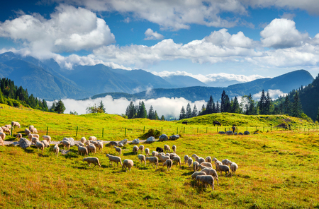 Sunny summer landscape with sheep in the pasture. Colorful morning scene in the Julian Alps, Triglav National Park, Slovenia, Europe. Beauty of countryside concept background.  Stock Photo
