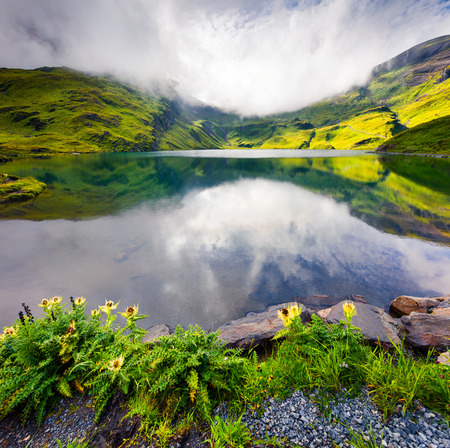 Colorful summer view on Bachalpsee lake. Green morning scene in the Swiss Bernese Alps, Grindelwald village location, Switzerland, Europe. Beauty of nature concept background.  Stock Photo