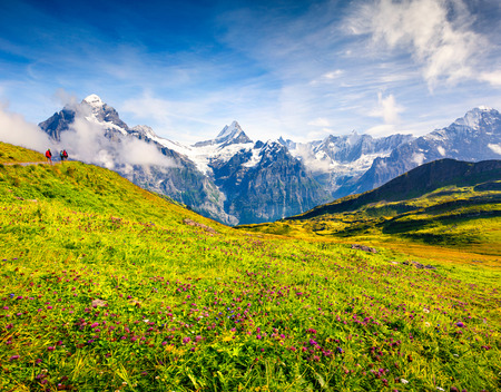 Colorful summer view near Bachalpsee lake with Schreckhorn and Wetterhorn peaks in the morning mist. Green morning scene in the Swiss Bernese Alps, Grindelwald village location. Switzerland, Europe.  Stock Photo