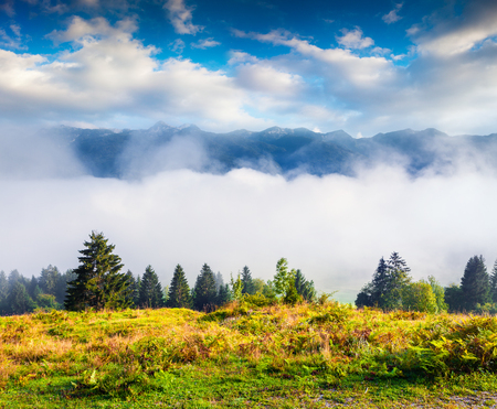 Foggy morning scene in Triglav national park, Bohinj lake location. Sunny summer view of Julian Alps, Slovenia, Europe. Artistic style post processed photo. Beauty of nature concept background.  Stock Photo