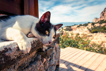 Street cat basking in the sun at the beach restaurant in Greece.