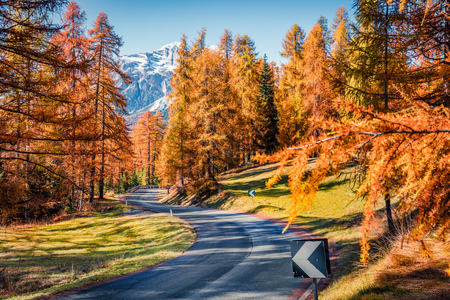 Picturesque morning view of empty asphalt road in larch forest. Sunny autumn scene of Dolomite Alps, Cortina dAmpezzo location, Italy, Europe. Beauty of countryside concept background. Stock Photo