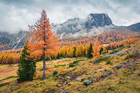 Foggy sunny view of Dolomite Alps with yellow larch trees. Colorful autumn scene of Ponta dei Lastoi mountain range. Giau pass location, Italy, Europe. Beauty of nature concept background.