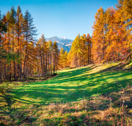 Beautiful autumn forest in the Dolomite Alps. Sunny morning view of mountain valley, Cortina dAmpezzo lacattion, Italy, Europe. Beauty of nature concept background.
