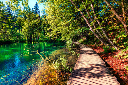 Sunny morning in Plitvice National Park. Colorful spring scene of green forest with pure water lake. Great countryside view of Croatia, Europe. Traveling concept background.