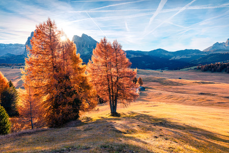 Impressive outdoor scene in Alpe di Siusi mountain plateau with beautiful yellow larch trees. Colorful autumn morning in Dolomite Alps, Ortisei locattion, Italy, Europe. Beauty of countryside concept background. Stock fotó