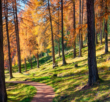 Beautiful autumn forest in the Dolomite Alps. Sunny morning view of mountain woodland, Cortina dAmpezzo lacattion, Italy, Europe. Beauty of nature concept background.