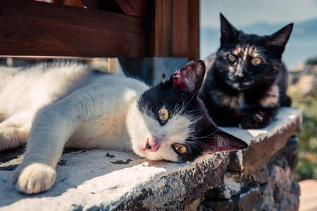 Street catі basking in the sun at the beach restaurant in Greece. Stock Photo
