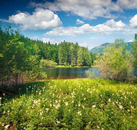 Splendid sunny morning on the blossom valley near Gessl village. Colorful summer view of the Grundlsee lake, Liezen District of Styria, Austria, Alps. Europe. Beauty of nature concept background. Stock fotó