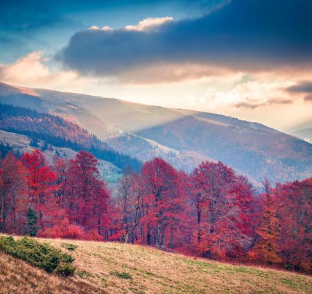 Dramatic autumn sunset of mountain valley. Colorful evening scene of Carpathian mountains, Kvasy village location, Ukraine, Europe. Beauty of nature concept background.