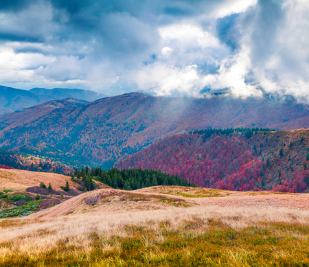 Dramatic autumn scene of mountain valley. Colorful morning scene of Carpathian mountains, Kvasy village location, Ukraine, Europe. Beauty of nature concept background. Stock Photo