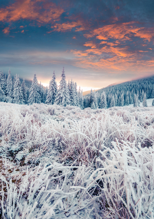 Incredible winter sunrise in Carpathian mountains with snow covered fir trees and grass. Colorful outdoor scene, Happy New Year celebration concept. Artistic style post processed photo.