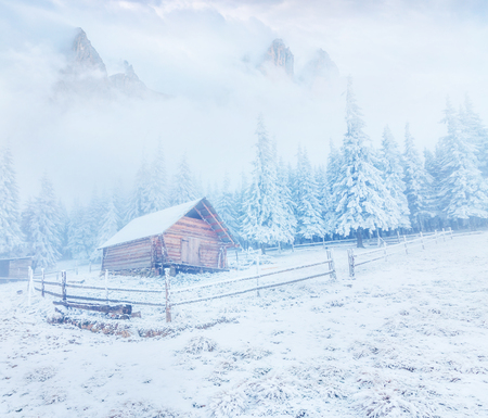 Frosty winter morning in Carpathian mountains with snow covered fir trees. Bright outdoor scene, Happy New Year celebration concept. Beauty of nature concept background.