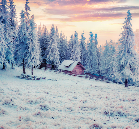 Акщіен winter sunrise in Carpathian mountains with snow covered fir trees. Colorful outdoor scene, Happy New Year celebration concept. Artistic style post processed photo.