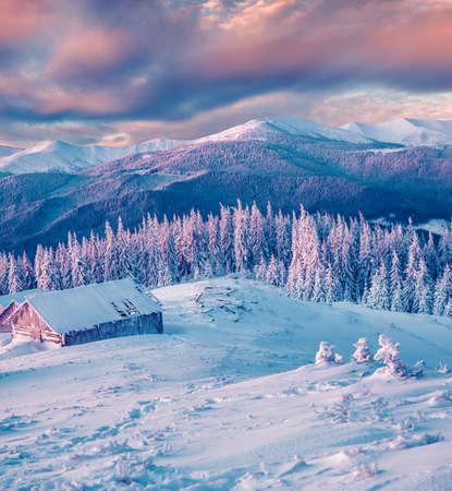 Magnifico tramonto invernale nella foresta di montagna con abeti innevati. Scena all'aperto colorata, concetto di celebrazione di felice anno nuovo. Foto elaborata in stile artistico. Archivio Fotografico