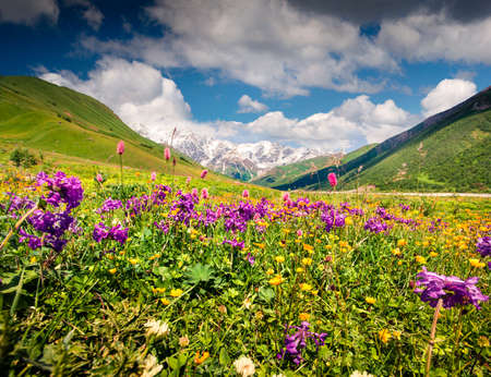Spectacular summer view on the bloobing flowers in Caucasus mountains. Sunny morning scene of the foot of Shkhara mountain, Ushguli village location, Upper Svaneti, Georgia, Europe. Stock Photo