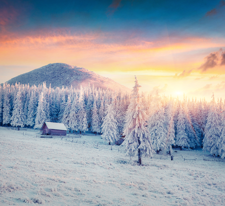 Great winter sunrise in Carpathian mountains with snow covered fir trees. Colorful outdoor scene, Happy New Year celebration concept. Artistic style post processed photo. Standard-Bild