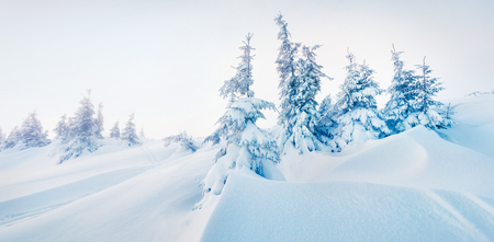 Bright winter panorama of mountain forest with snow covered fir trees. Colorful outdoor scene, Happy New Year celebration concept. Artistic style post processed photo. Stock Photo