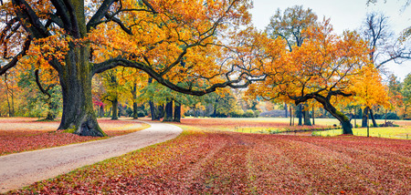Colorful autumn view of Muskau Park. Impressive morning scene of Bad Muskau town square, Upper Lusatia region, Saxony, Germany, Europe. Beauty of nature concept background.