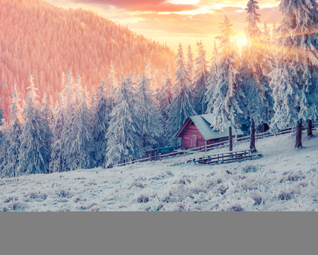 Impressive winter sunrise in Carpathian mountain village with snow covered fir trees. Colorful outdoor scene, Happy New Year celebration concept. Beauty of countryside concept background. Stock Photo