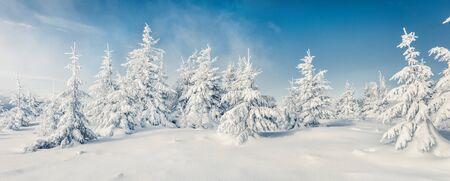 Favoloso panorama invernale della foresta di montagna con abeti innevati. Scena all'aperto colorata, concetto di celebrazione di felice anno nuovo. Bellezza della priorità bassa del concetto di natura. Archivio Fotografico