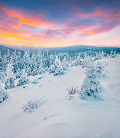 Incredible winter sunset in mountain forest with snow covered fir trees. Colorful outdoor scene, Happy New Year celebration concept. Beauty of nature concept background.