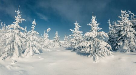 Frosty winter morning in mountain forest with snow covered fir trees. Splendid outdoor scene, Happy New Year celebration concept. Artistic style post processed photo.