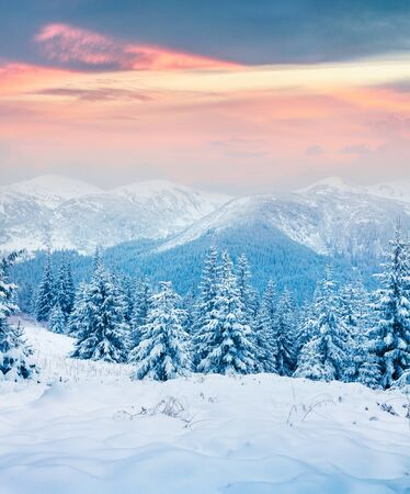 Gorgeous winter sunset in Carpathian mountains with snow covered fir trees. Colorful outdoor scene, Happy New Year celebration concept. Artistic style post processed photo.