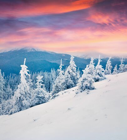 Dramatic winter sunrise in Carpathian mountains with snow covered fir trees. Colorful outdoor scene, Happy New Year celebration concept. Artistic style post processed photo. Zdjęcie Seryjne
