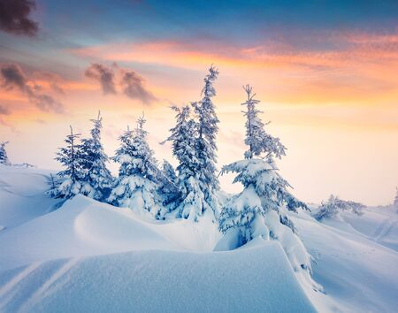 Magnificent winter sunrise in mountain forest with snow covered fir trees. Colorful outdoor scene, Happy New Year celebration concept. Artistic style post processed photo.
