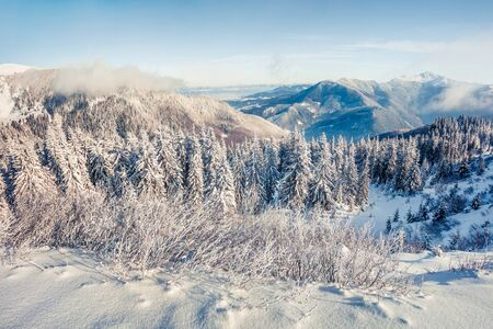 Exciting winter postcard of Carpathian mountains with snow covered fir trees. Colorful outdoor scene, Happy New Year celebration concept. Artistic style post processed photo.