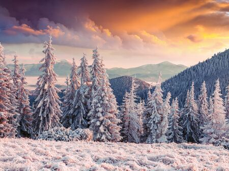 Unbelievable winter sunrise in Carpathian mountains with snow covered fir trees and grass. Dramatic outdoor scene, Happy New Year celebration concept. Beauty of nature concept background.