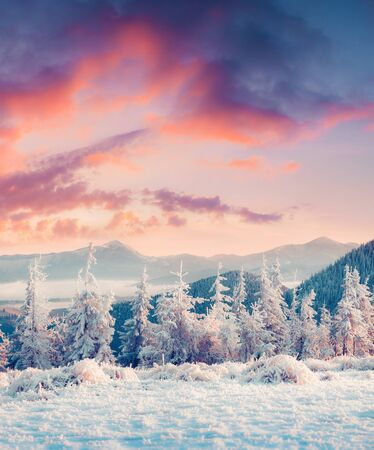Picturesque winter sunrise in Carpathian mountains with snow covered fir trees. Vertical orientation view of snowy forest. Happy New Year celebration concept. Artistic style post processed photo.