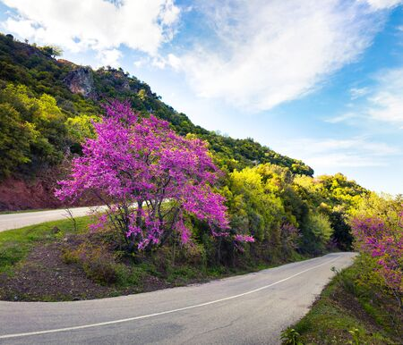 Picturesque spring view of mountain pass with blooming tree, Kamena Vourla town location. Colorful spring scene of Greece, Europe. Beautiful morning landscape in countryside. Traveling concept background.