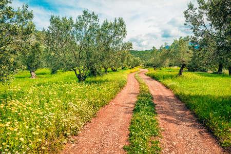 Splendid spring scene of olive garden on the Zakynthos island. Sunny morning view of Greece, Europe. Beauty of countryside concept background. Zdjęcie Seryjne
