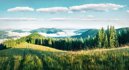 Splendid summer morning in the Carpathian mountains. Bright sunny  panorama of the mountain valley in June, Ukraine, Europe. Beauty of nature concept background. Zdjęcie Seryjne