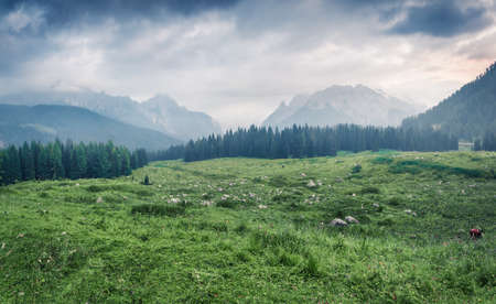 Dramatic summer scene of italian Alps. Misty morning scene of mountain valley, Vigo Di Cadore village location, Italy, Europe. Beauty of nature concept background. Zdjęcie Seryjne