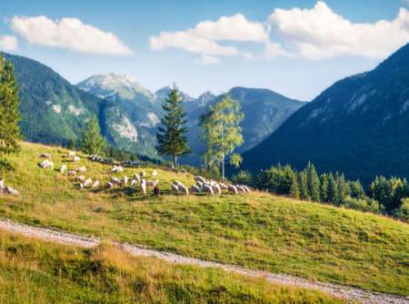 Wonderful summer view of sheeps on the pasture. Sunny morning scene in the Julian Alps, Triglav National Park, Bohinj lake location, Slovenia, Europe. Orton Effect.